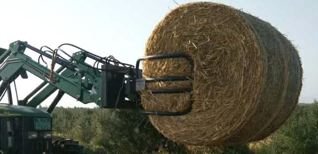 套种、收割燕麦