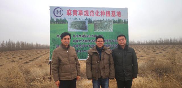 北京华邈集团以及中国中药材领导来我公司基地视察麻黄草采割情况!